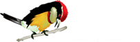 Peru Birding Trips